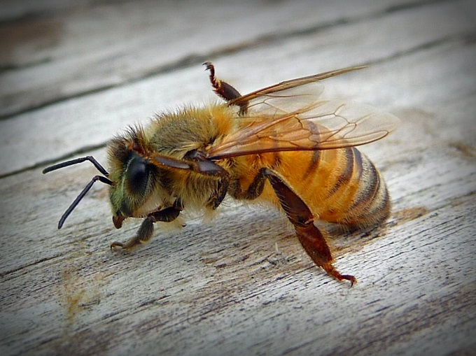 Jak na vosí a včelí žihadlo?